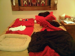 2 pugs on bed F