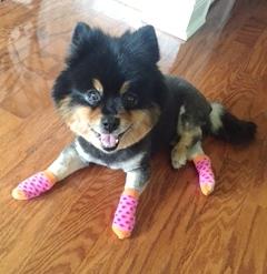 Sarah pink socks