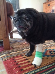 Tani's torn nail bandage F
